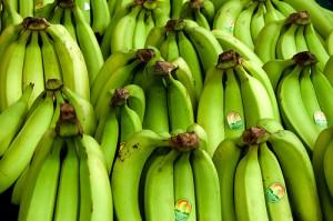 Reihen von Bananen