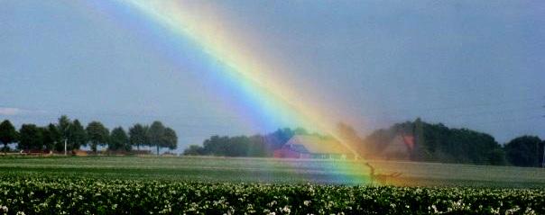Ein Regenbogen im Feld im Sommer